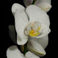 Цветы :: Михаил Ивакин