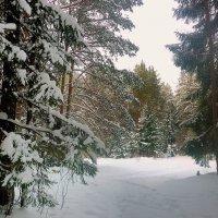 Лесными, зимними дорожками. :: Павлова Татьяна Павлова