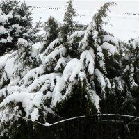 После снегопада... :: Тамара (st.tamara)