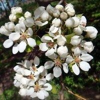 Помечтаем о весне... :: Нина Корешкова