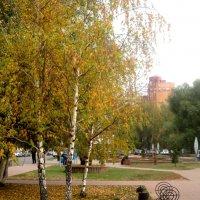 Березки осенью :: Елена Семигина