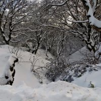Зимний лес :: Наталья Джикидзе (Берёзина)