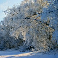 Распушились деревья инеем... :: Евгений Юрков