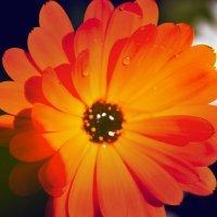 flower :: Ирина Шарафутдинова