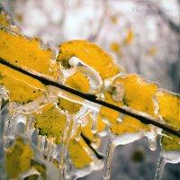 ледяной октябрь :: Ирина Шарафутдинова