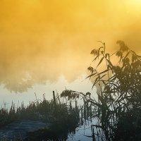 Утро на пруду :: Николай Гришин