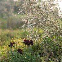 Скоро весна :: susanna vasershtein