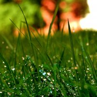 Просто трава... :: СветЛана D