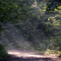 На лесной тропинке :: Юрий Цыплятников
