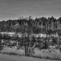 Серая зима :: Антон Щербаков