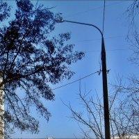 Такое небо голубое в феврале! :: Нина Корешкова