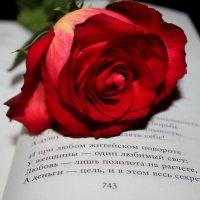 почитаем стихи :: Таня Фиалка