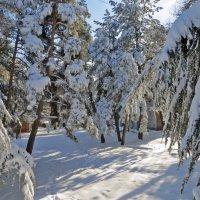 Снегом украшены :: Наталья (D.Nat@lia)
