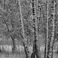 Снежные узоры :: Надежда Баликова