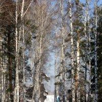 Жизнь людей в лесу . :: Мила Бовкун