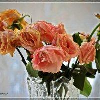 Розы с мороза :: Виктор Бондаренко