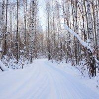 зима :: Элла Чуксина