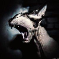Сожруууу! :: Андрей Качин