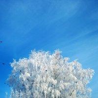 winter :: Юля Рудакова