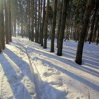Лыжня . :: Мила Бовкун