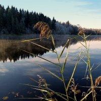 Озеро Колодинское :: Любовь