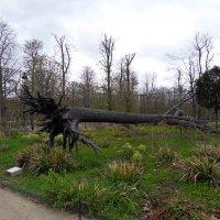 Бронзовая скульптура поваленного дерева :: Natalia Harries