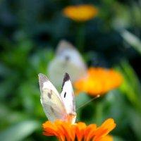 На соседних цветках :: Julia Martinkova