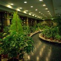 Зимний сад. Челябинский железнодорожный вокзал. :: Надежда