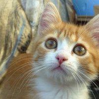 Мой любимый кот Бакс :: Павлова Татьяна Павлова