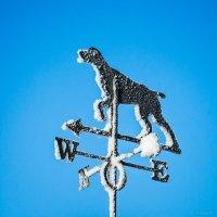 Зимний западный ветер :: Владимир Клещёв