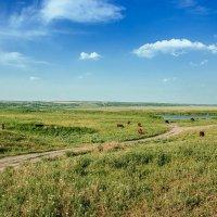 Летний пейзаж. :: Раскосов Николай