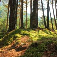 Солнце в лесу. :: Олег Петрушин