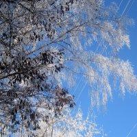 Зимнее небо :: Елена Семигина
