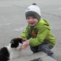 бесстрашная кошка :: Екатерина Бордунова