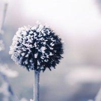 зимний цвет :: Виктор Пушкин