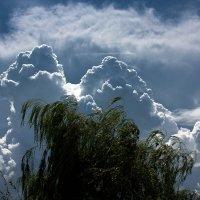 Проекция на небе :: Ларсен Кивалин