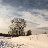 Зимняя прогулка :: Евгения Каравашкина