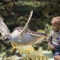 Дикие животные и детский мир :: Елена Ахромеева