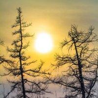 Северное солнце :: евгений Смоленцев
