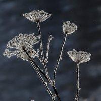 winter flowers :: Dmitry Ozersky