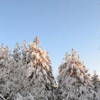 Снежные дебри :: Ольга