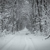 И нам немножко зимы досталось.. :: Андрей Нибылица
