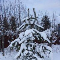 зима :: Таня Кукольникова