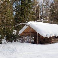 избушка в лесу... :: Марина Харченкова