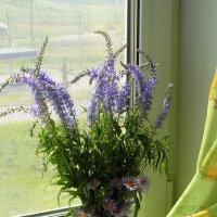 Очень простые,цветы полевые... :: nadyasilyuk Вознюк