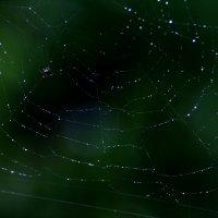 Паучок и его Вселенная :: Damir Si