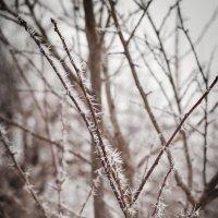 Холодное утро февраля 2015 :: Андрей Гетьман