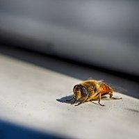 Усталая муха... :: марк
