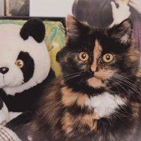 А глаза, как у панды :: Алёна Доля