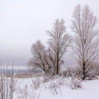 Зимние зарисовки :: Юрий Стародубцев